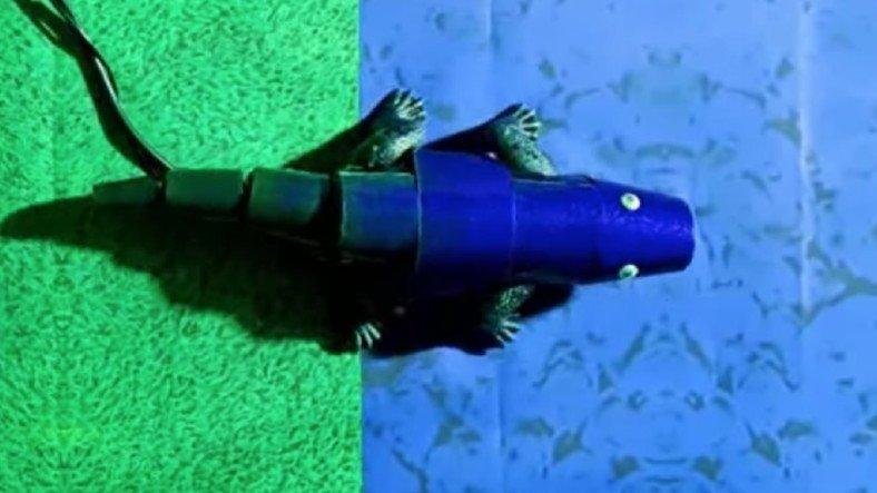 kamufle olabilen robot bukalemun gelistirildi